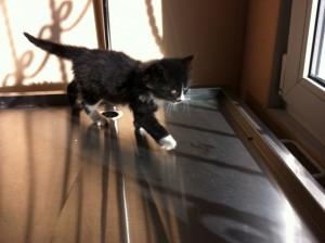 Kedi-yeni misafir